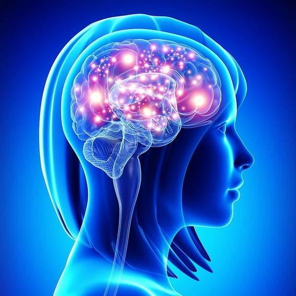 Чем питается мозг? — Мифы и реальность!