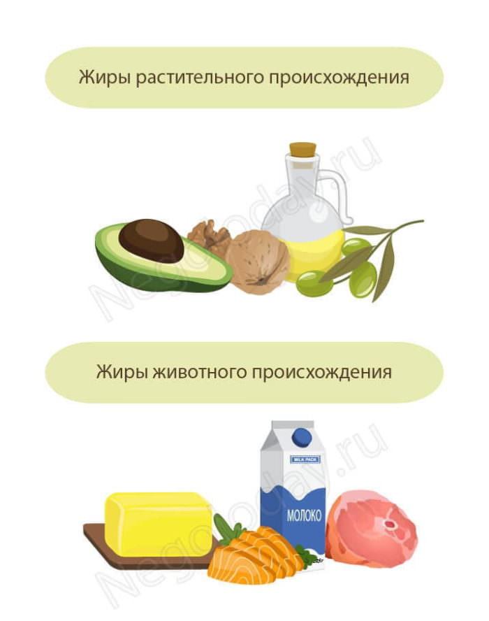 Жиры растительные VS жиры животные